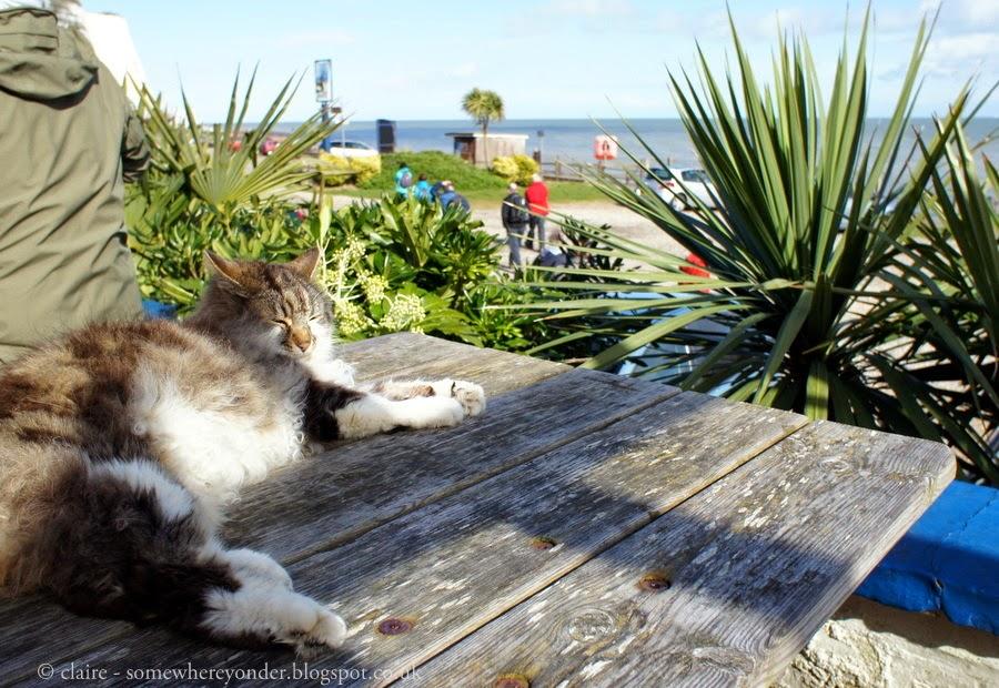 Pub cat - St Margaret's Bay, Kent, UK