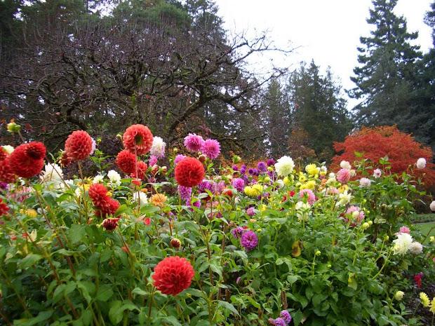 gardeners maximize