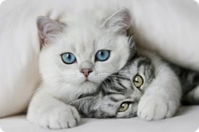 Fotos de gatos tiernos
