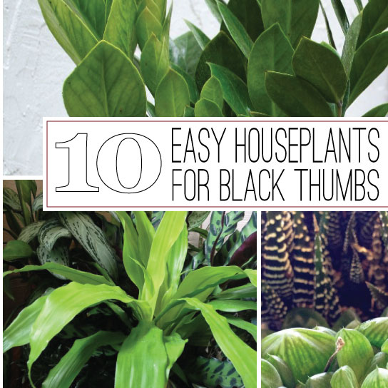 The rainforest garden 10 of the easiest houseplants for black thumbs - Large house plants low light ...