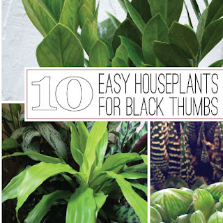 The rainforest garden 10 of the easiest houseplants for black thumbs - House plants that grow in low light ...