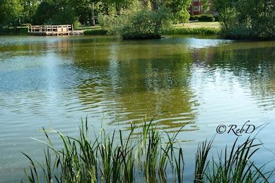 Trollsjön, Eslöv, på sommaren. Vass, vatten, brygga. foto: Reb Dutius