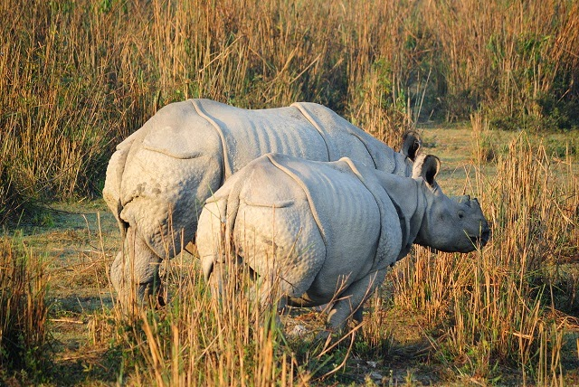 Kaziranga National Park in World Heritage Sites in India