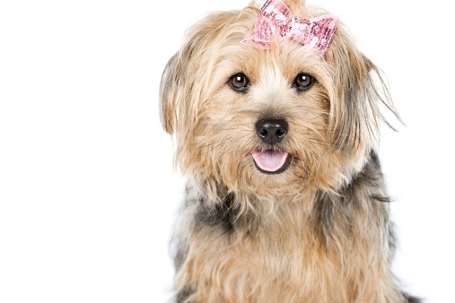 Female Dog Names In Australia