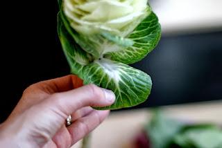 Hoa bắp cải với cách cắm độc đáo 02