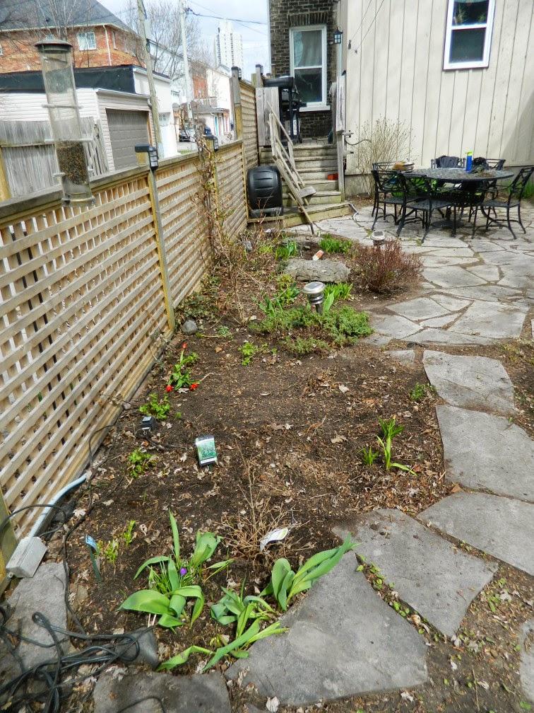 Paul Jung Gardening Services Toronto Leslieville spring garden clean up after