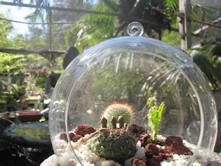 Cactus Glass Bubble