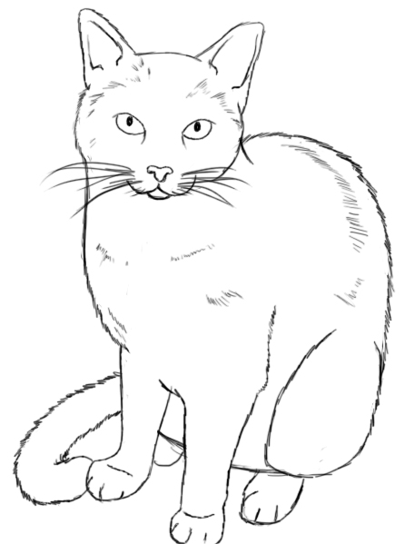 Skinny Cat Drawing Draw The Nose of Your Cat Near