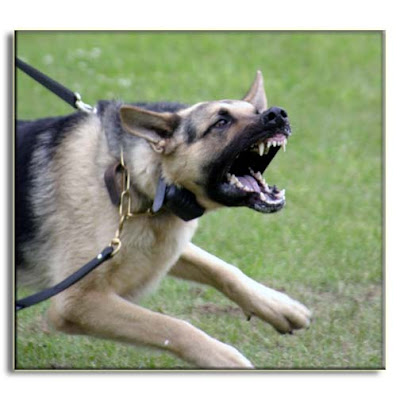 aggressive-dog-behavior