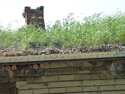 sod roof