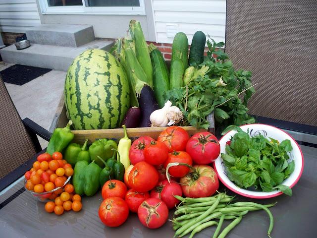 organic watermelon, eggplant, zucchini, garlic, celery, tomato, pepper, basil, cucumber, green beans
