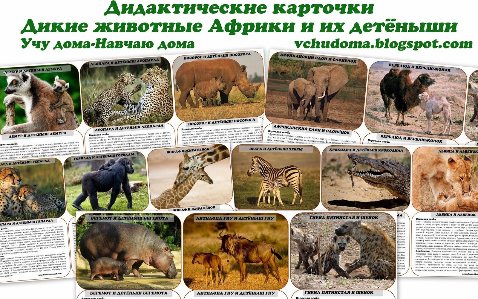 Секреты названий диких животных в лесах казахстана водится много диких животных