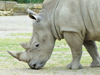 Rhino Dublin Zoo