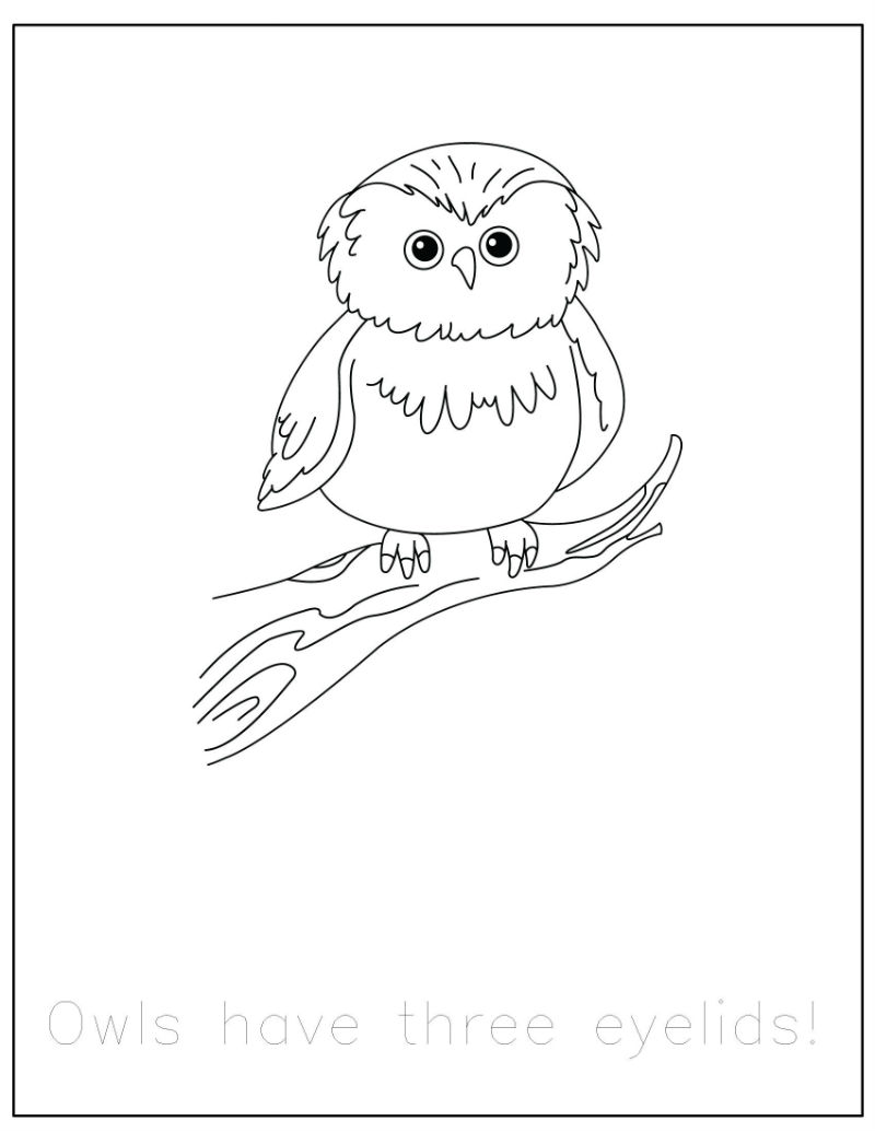 Forest Animals Coloring Pages With Traceable Fun Facts