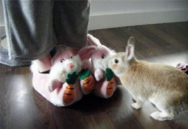 funny animal pictures, cute bunny