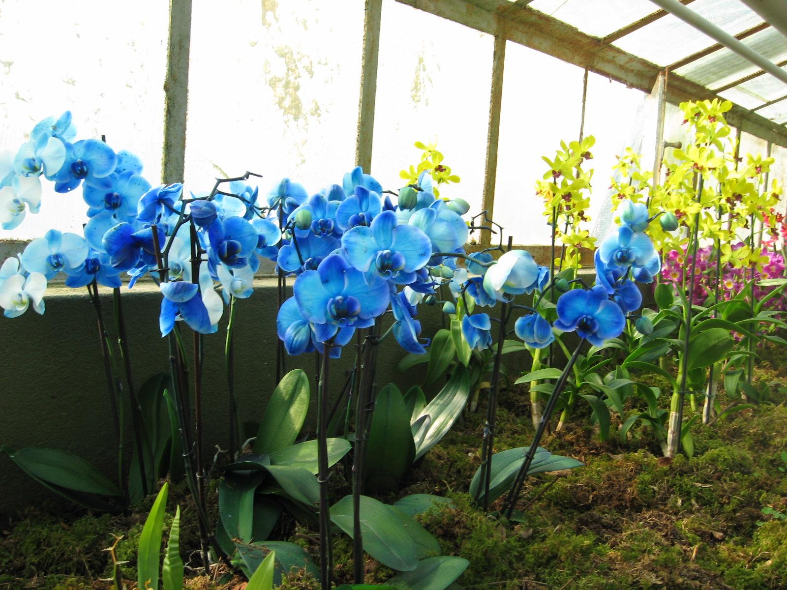Arboretum lubiana turisti a ogni costo for Costo orchidea
