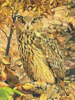 I Certamen y Exposición de Pintura de Aves SEO/BirdLife
