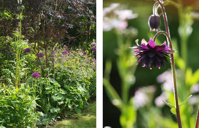 Vild, frodig og alligevel stramt komponeret have