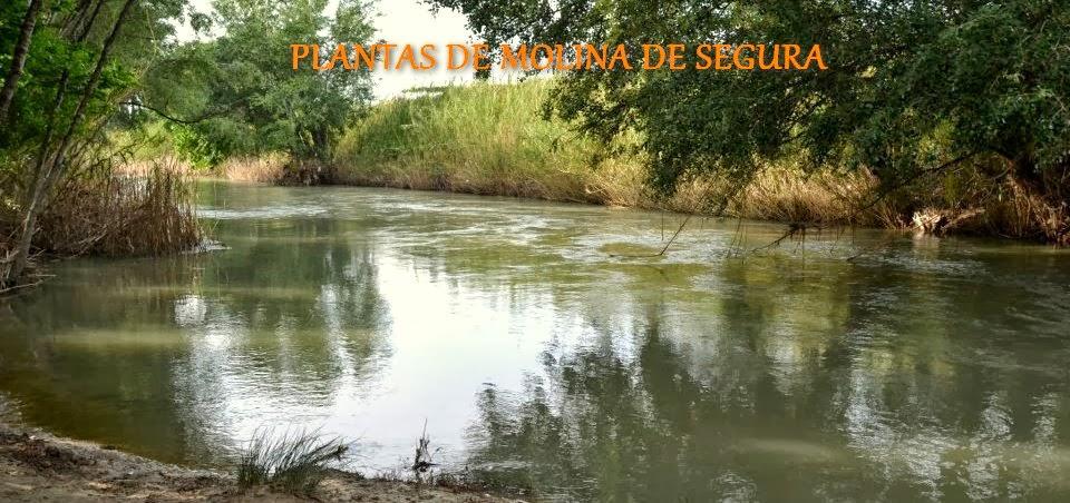PLANTAS DE MOLINA DE SEGURA