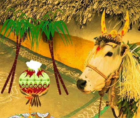 thai pongal is one of the most important tamil festivals and is ...