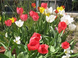 bloemen pracht