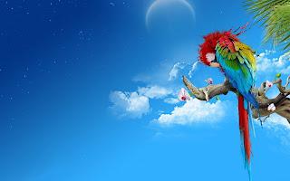 Parrot HD Animal Wallpaper