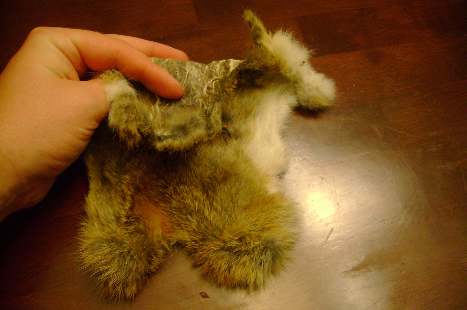 brain on furs