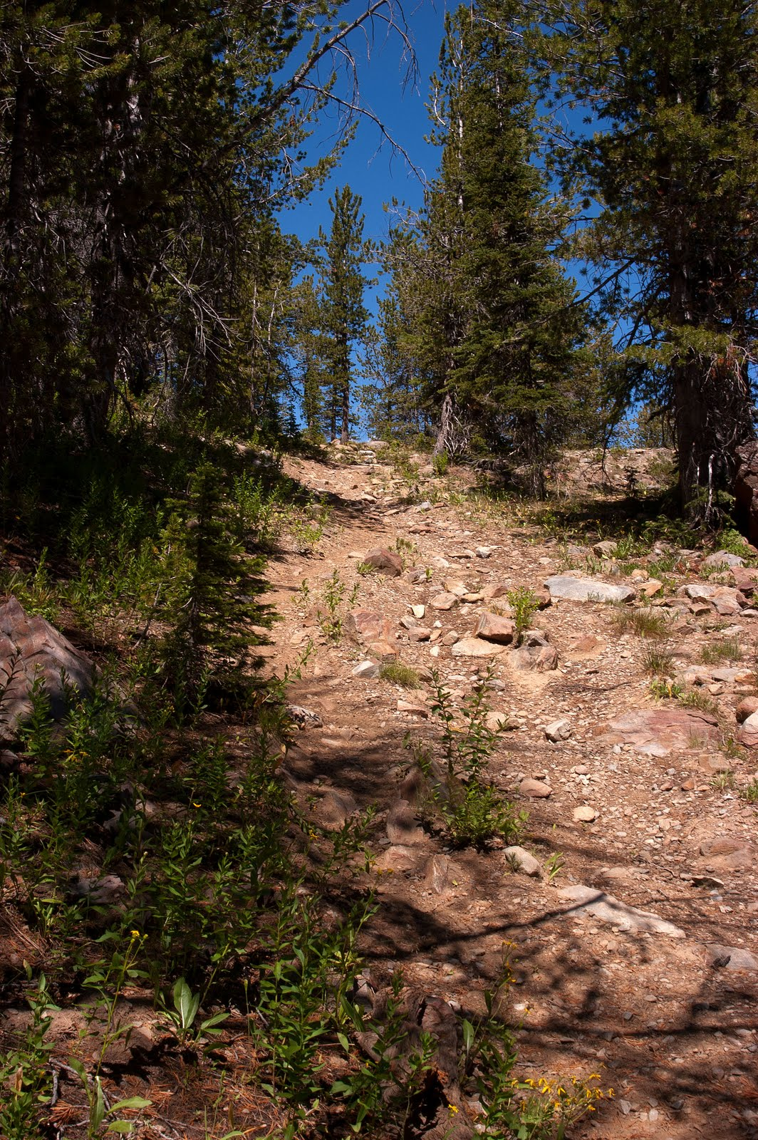 while the majority of the trail is nicely graded with a steady but not steep climb the last