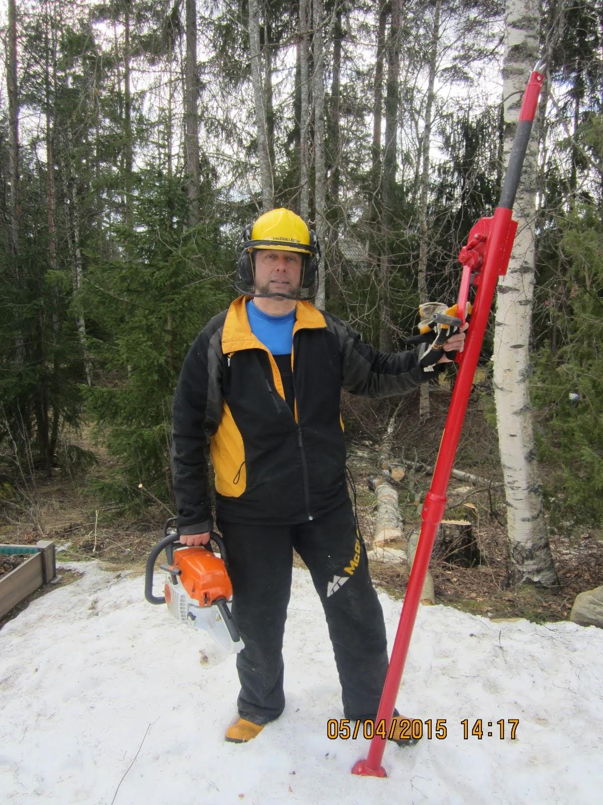 Pihakoivujen ja muidenkin pihapuiden kaadot karsinnat stalpen kaadonsuuntaajan avustamana