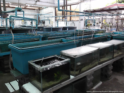 Phuket Marine Biology Department