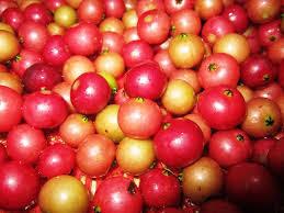 buah-kersen.jpg