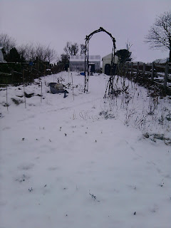 Snow covered garden.