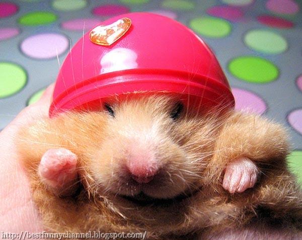 Funny hamster 2.