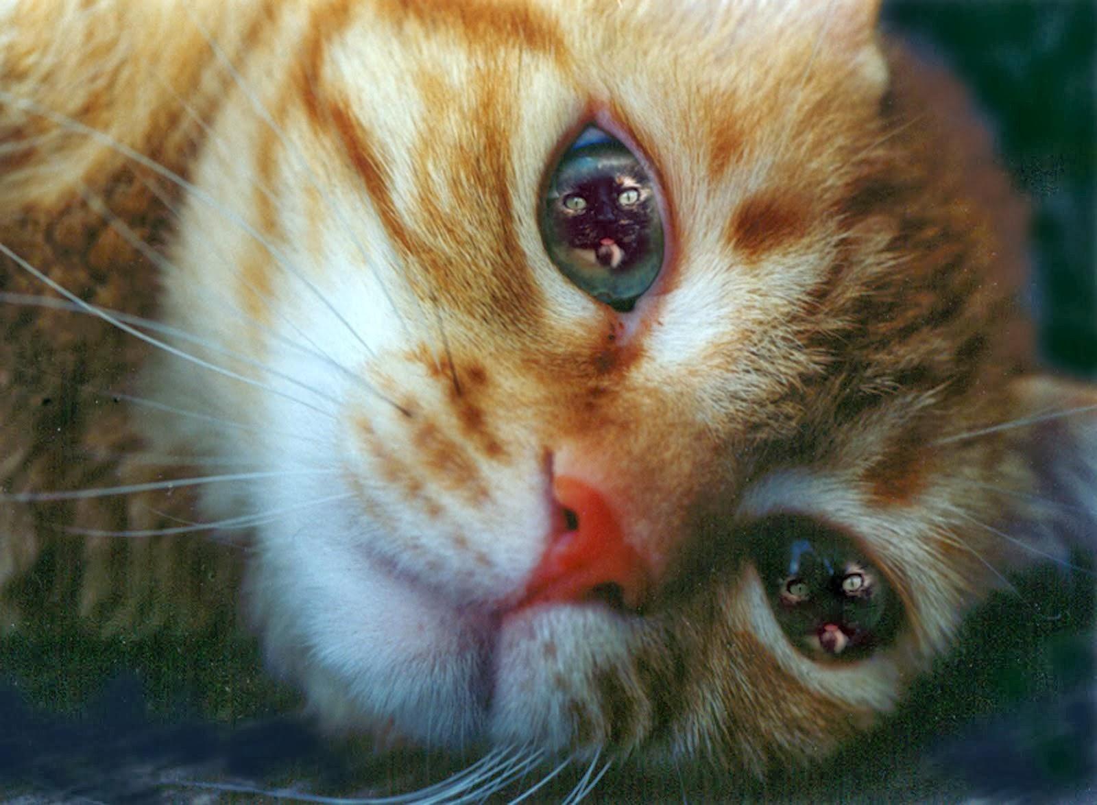 Ginger e Fred (nei suoi occhi)