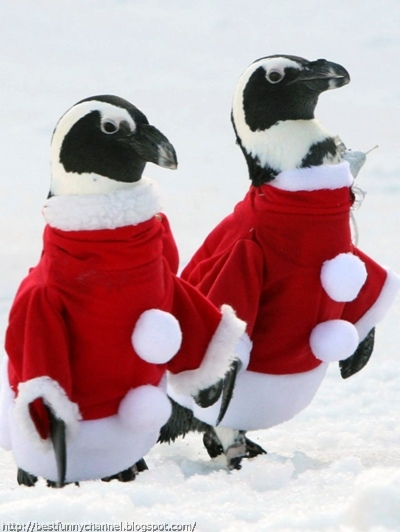 Two funny Christmas penguins.