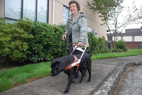 Guide dogs for the blind - photo#28