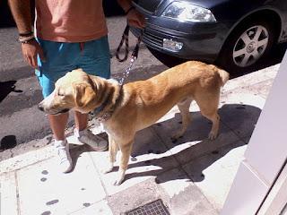 Βρεθηκε σκυλακος στου Ζωγραφου. Τον φιλοξενουν μεχρι την Δευτερα 5 Οκτωβριου οπότε επείγει φιλοξενία