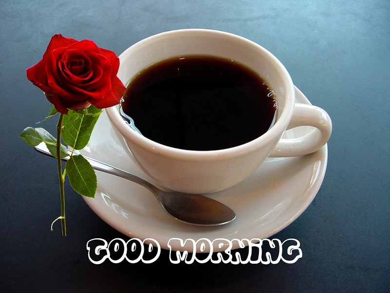 morning wishes with red rose