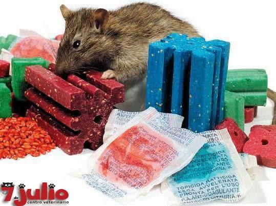 Raticidas, un peligroso tóxico para nuestras mascotas.