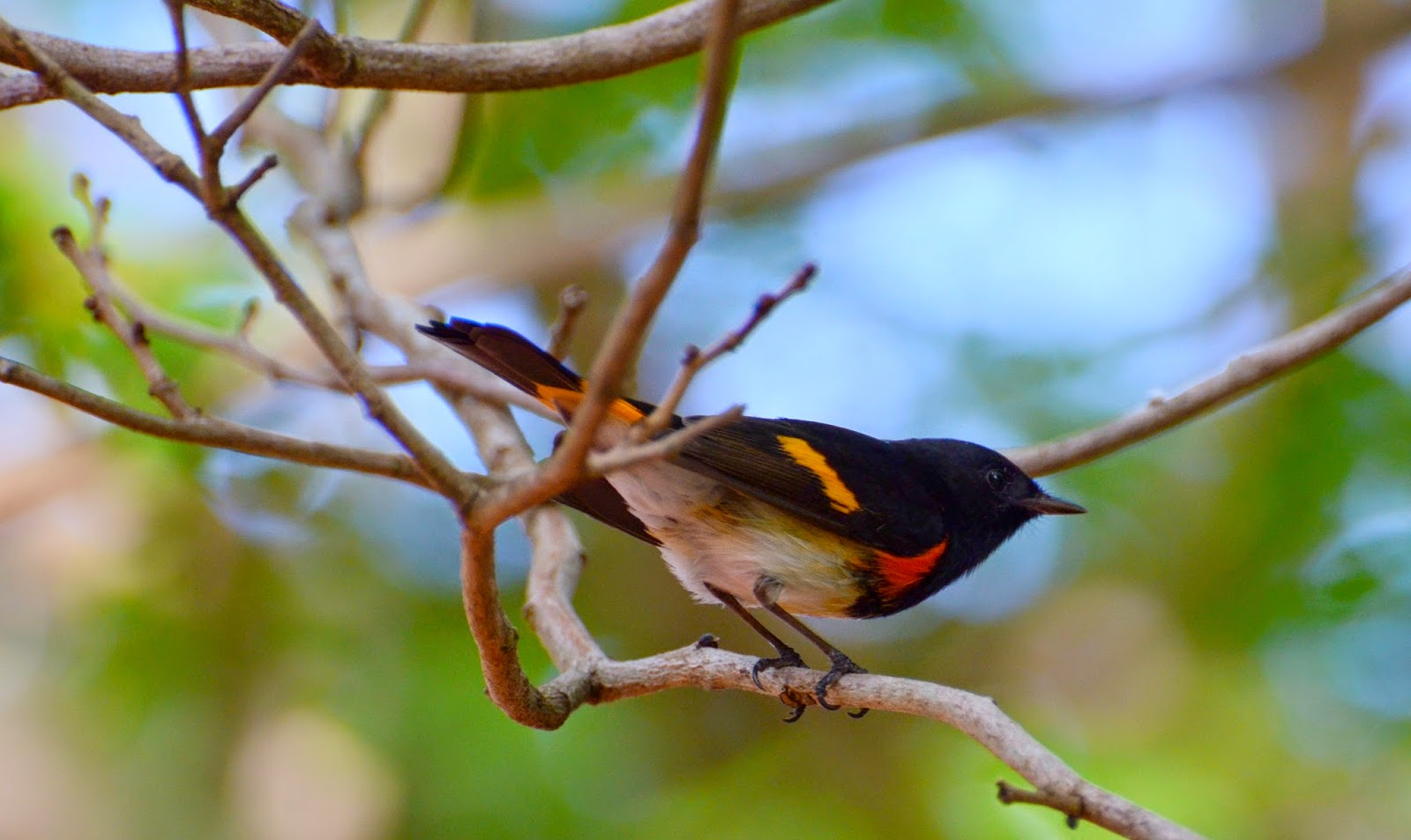 essay of birds Bird migration is the regular seasonal movement, often north and south along a flyway this belief persisted as late as 1878, when elliott coues listed the titles of no less than 182 papers dealing with the hibernation of swallows.