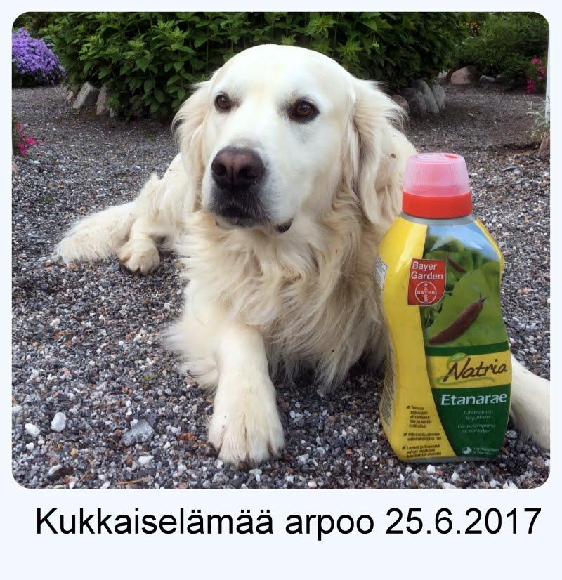 ARVONTA TÄSSÄ BLOGISSA: