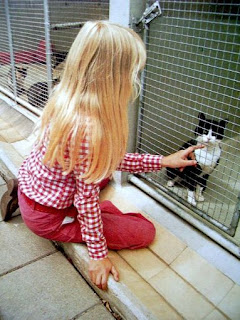 girl petting cat in an animal shelter