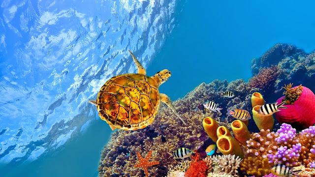 Imagenes de Tortugas en el mar