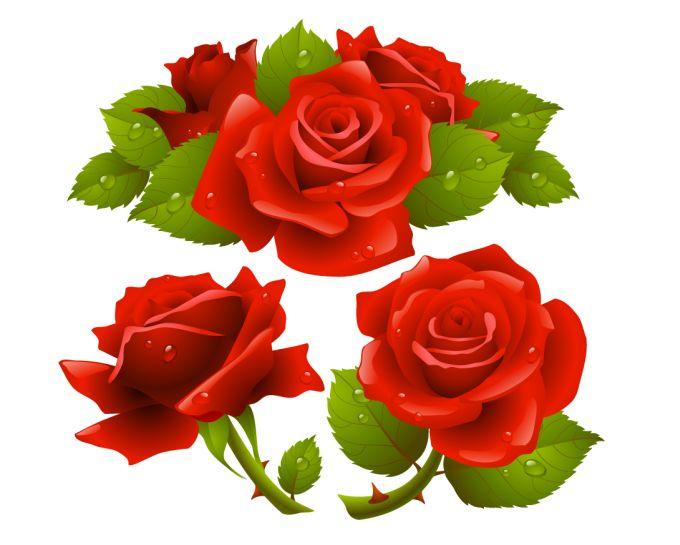Vector hoa hồng tuyệt đẹp 002