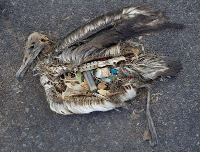 Kesan Pencemaran
