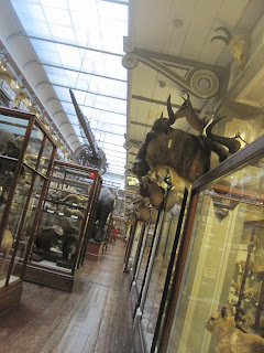 Glass cases and mounted antlers in a long room