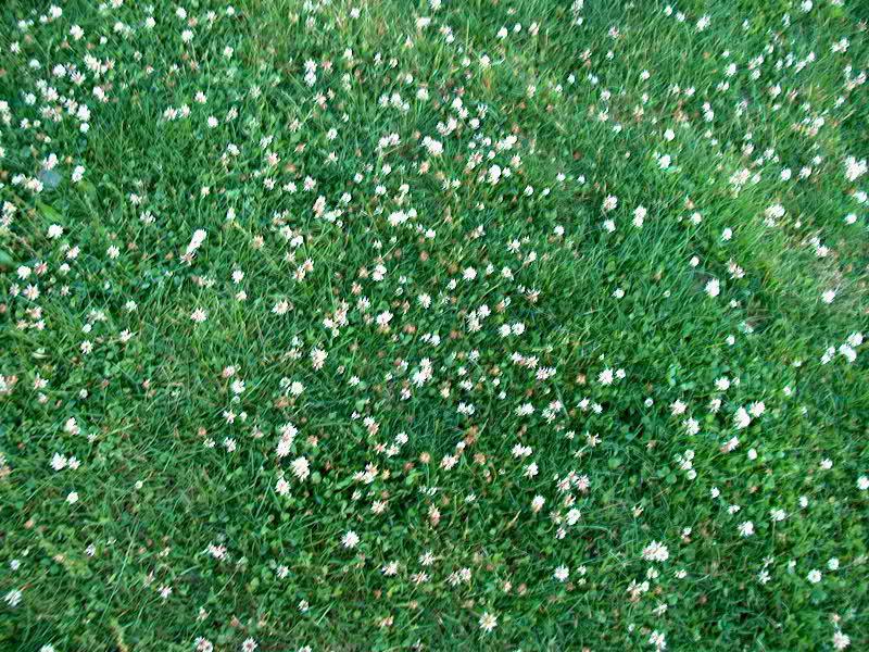 Backyard Playground Ground Cover : Bills Photos Ground Cover at Playground (June 15, 2012)