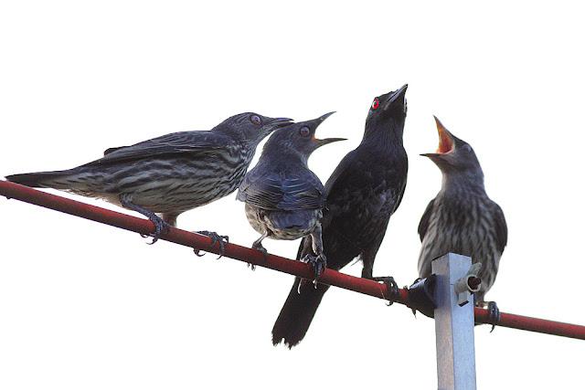 Mak kami lapar ! - Mumy we are hungry !