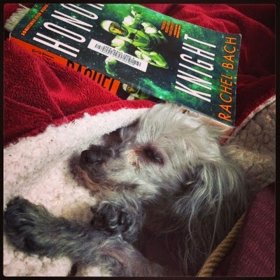 A sleek grey poodle, Murchie, lays in a blanket nest with only his face and forepaws poking out. Behind him is a paperback copy of Honor's Knight. Its cover depicts an armor-clad woman hovering in green-tinged space