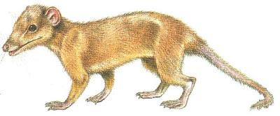 mamiferos del jurasico Shuotherium